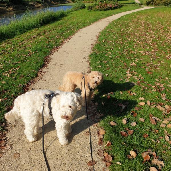 therapiehonden turner en hooch